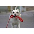 Рулетки и поводки для собак